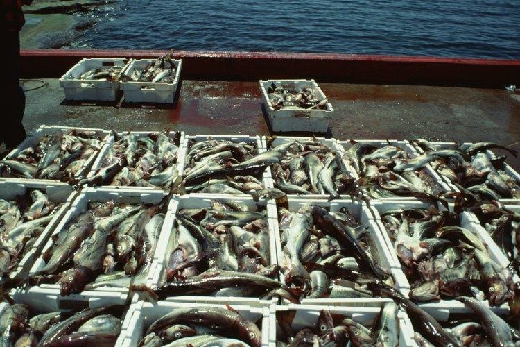 La pesca era una industria importante en la antigua Galilea.