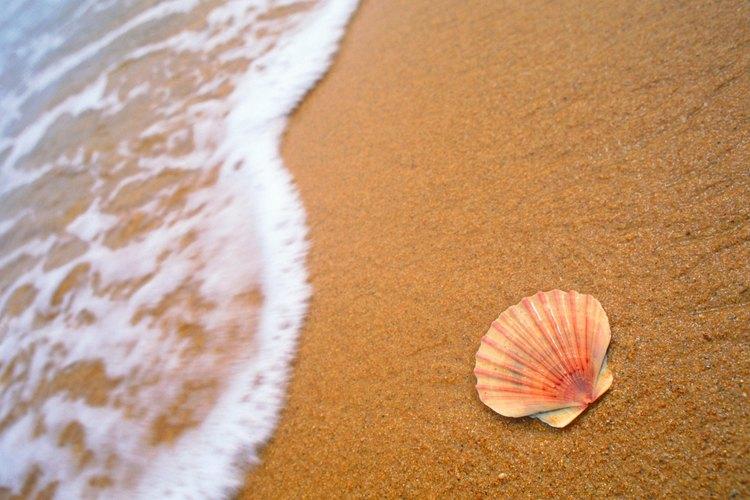 La grava de mar por lo general no se encuentra muy lejos de regiones como la Costa del Golfo, que tienen una gran cantidad de conchas.