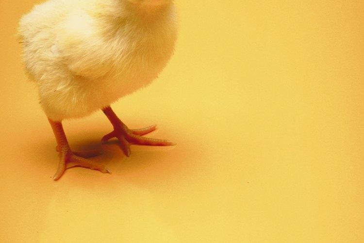 Un gallinero no sólo te suministrará huevos, sino también ingredientes para el compost.