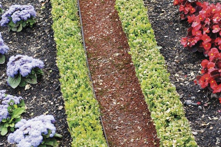 Los cercos de bojes le dan un aspecto formal a los jardines.