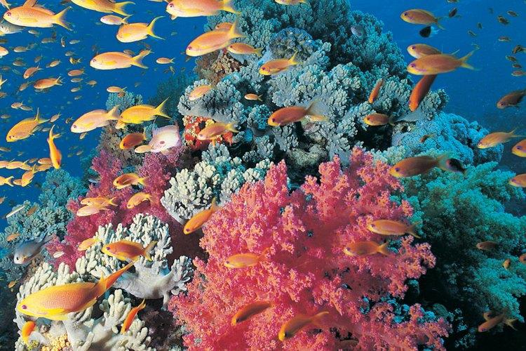 Una barrera coralina hace que las aguas de esta playa adquieran hermosas tonalidades turquesas.