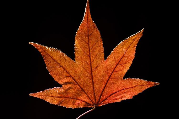 Preserva los colores vívidos de las hojas al secarlas.