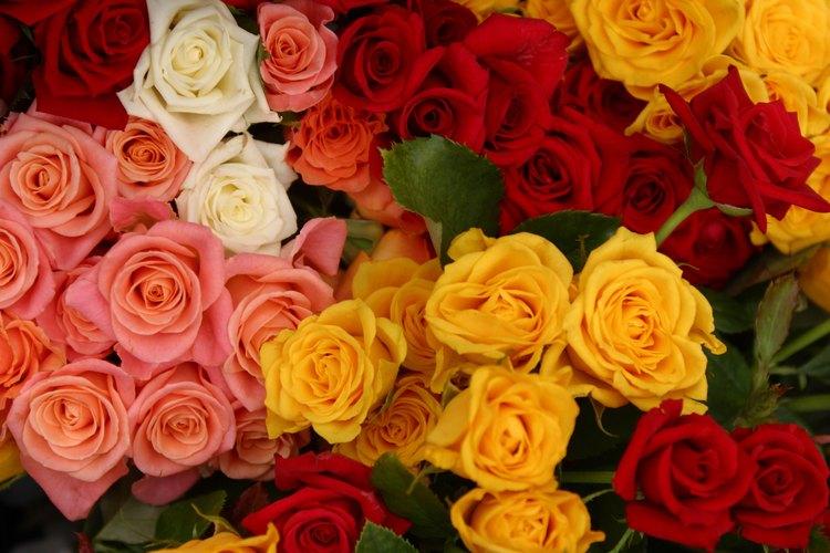 Mantén las rosas cortadas fuera del sol y en un lugar fresco.