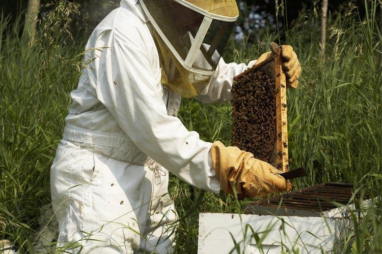 Una apicultura apropiada resultará en una colmena sana año tras año.