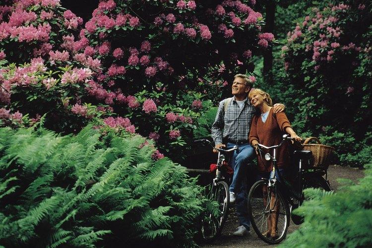 Puedes usar cualquier tipo de bicicleta para pasear en días agradables.