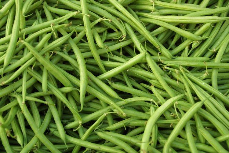 Las vainas de frijoles inmaduras se comen como frijoles verdes.