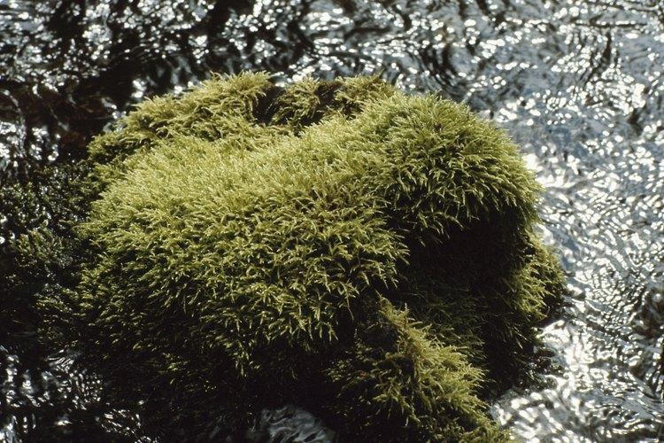 Remueve el musgo de tus caminos de grava o piedra para evitar resbalones y caídas.