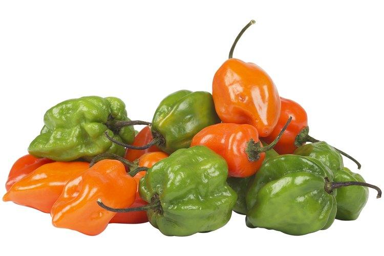 El pimiento ají dulce es verde al principio, pero con la edad se vuelve naranja.