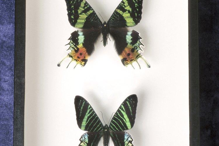 Visita un museo o el zoológico en tu área que tiene una exposición de insectos.