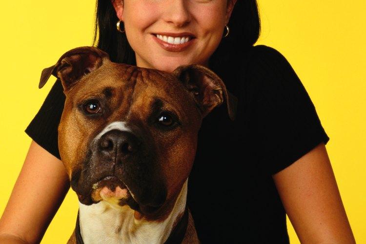 Los dueños que aman a sus pit bulls usan sus perreras de manera adecuada.