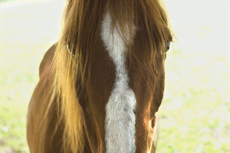 Mantén la crin de tu caballo prolija utilizando el método de jalado a mano.
