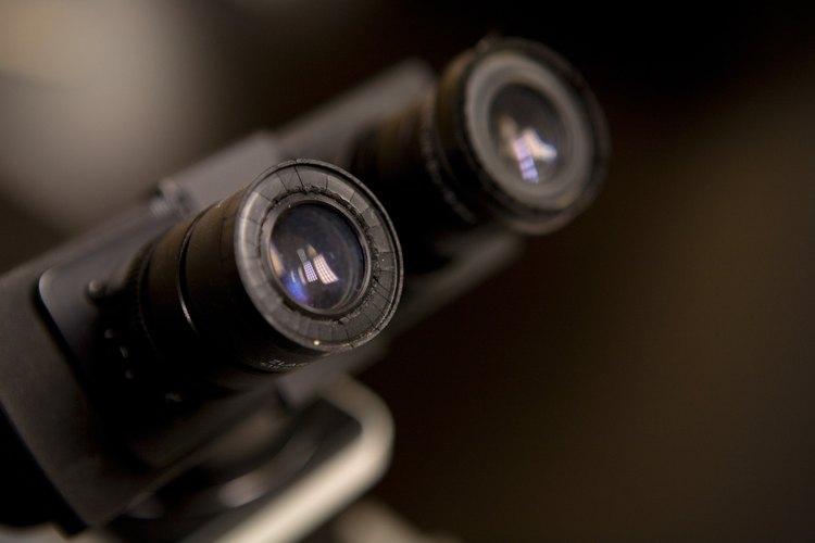 Los microscopios de lata potencia pueden observar las funciones a nivel celular.