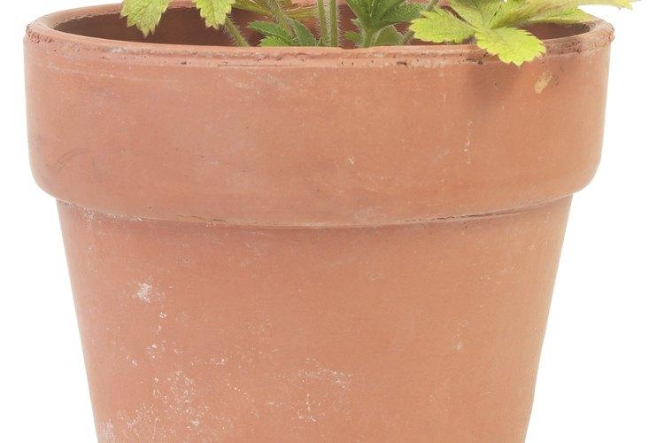 Utiliza suelo de calidad para macetas con el fin de obtener un crecimiento saludable de las plantas.
