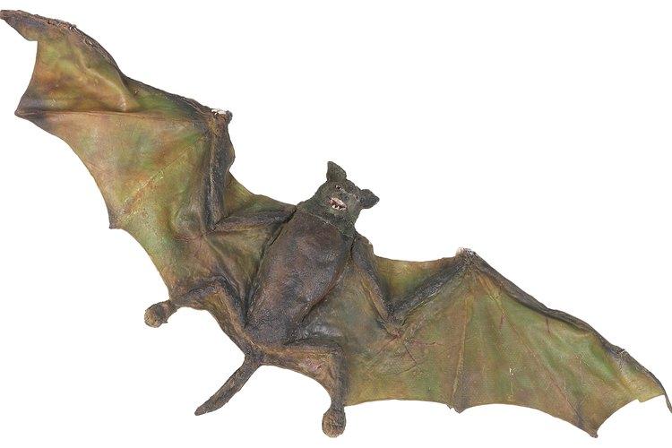 Los murciélagos son un buen ejemplo de los animales nocturnos.