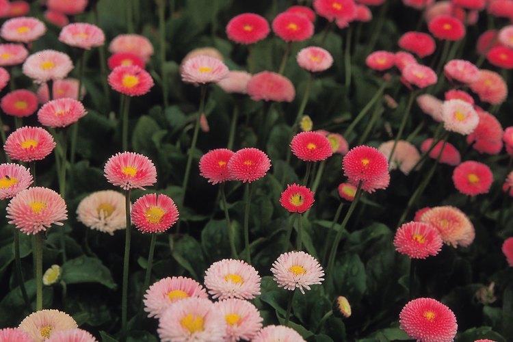 Las flores se han utilizado en la cocina durante muchos siglos.