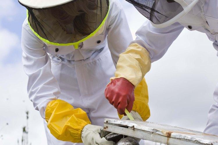 Los apicultores cuidan de una colmena.