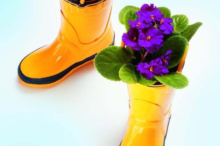 Con el apropiado cuidado y luz, las violetas africanas pueden florecer a lo largo del año.