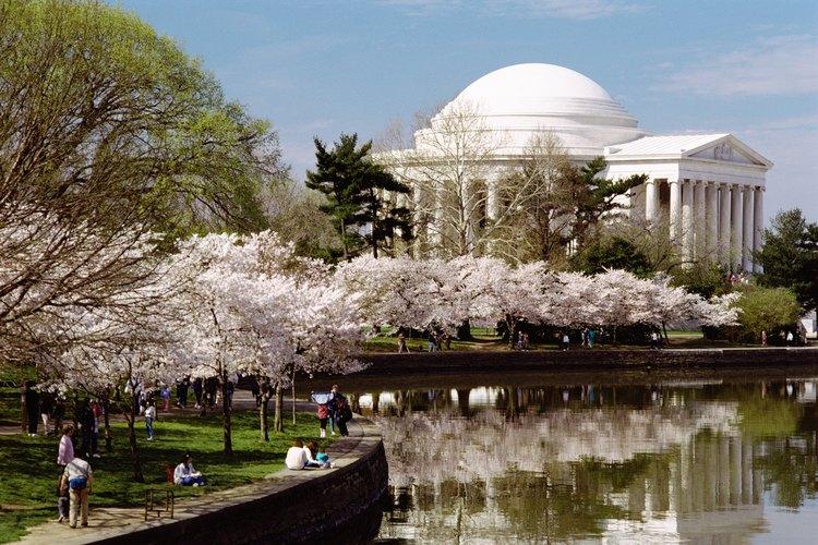 Los cerezos Yoshino muestran sus sakuras alrededor del primero de abril en Washington, D.C..