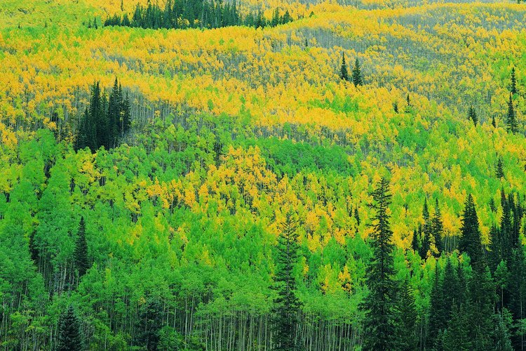 Puedes admirar los colores del otoño en muchos de los parques estatales de Colorado.