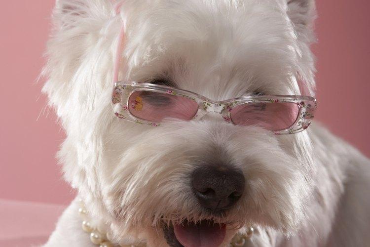 Convierte el simple collar de tu perro en una versión deslumbrante.