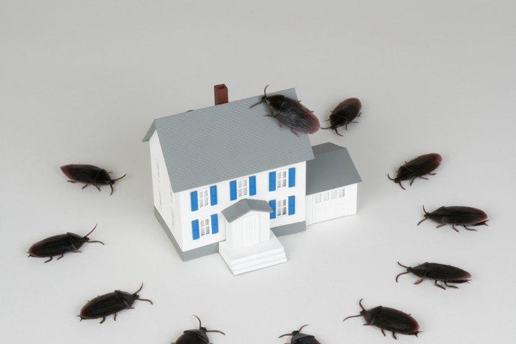 Cuando las cucarachas se juntan afuera, algunas pueden entrar.