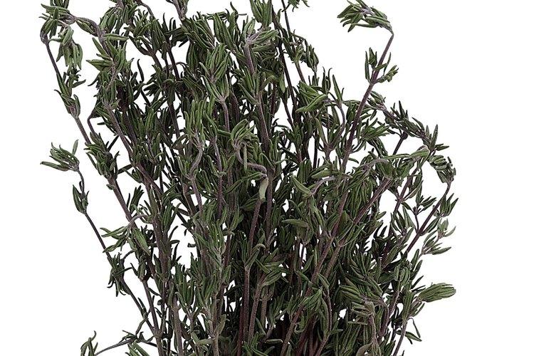 El romero forma un arbusto atractivo que atrae a las mariposas y abejas.