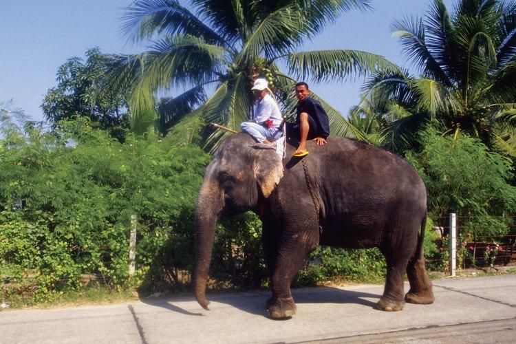 Atrévete a montar un elefante al ir a Tailandia.