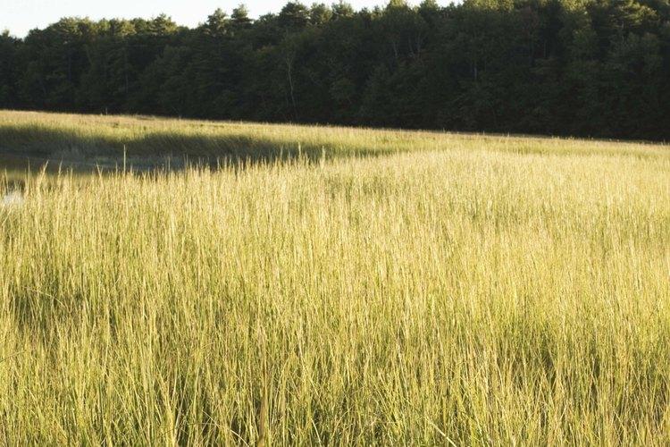 Los suelos de los humedales acumulan mucha agua.