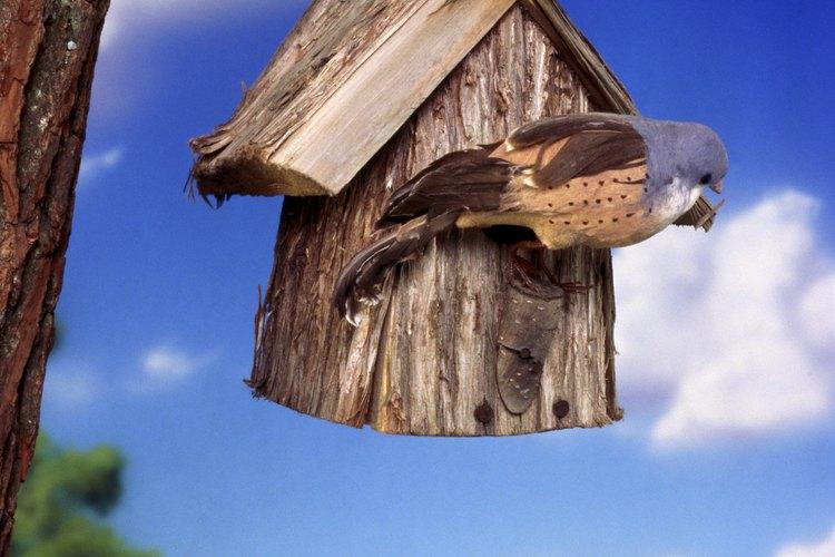 Cuelga un comedero para pájaros desde la rama de un árbol.