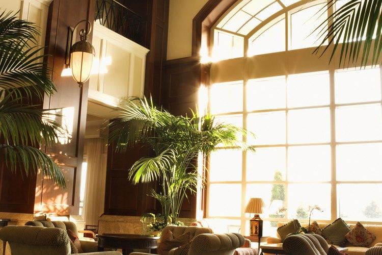 La palmera majestuosa prospera en interiores si cuenta con mucha iluminación y humedad.