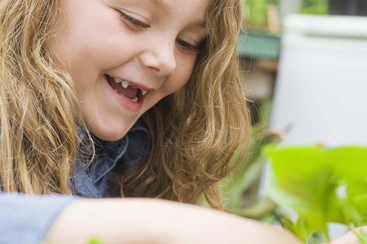Los estudiantes entenderán mejor qué es la clorofila extrayéndola de las hojas.