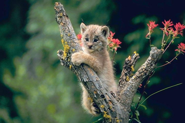 Los gatos disfrutan de subir a lugares altos para mirar por encima de su territorio.