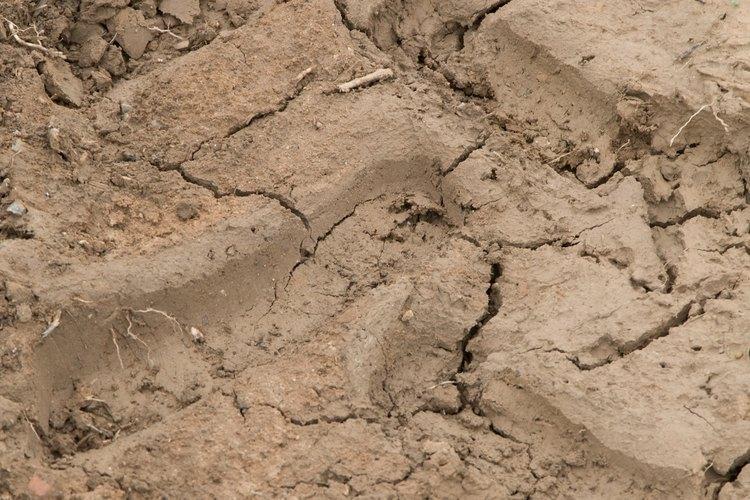 Las prácticas agrícolas no sustentables contribuyen a la erosión del suelo.
