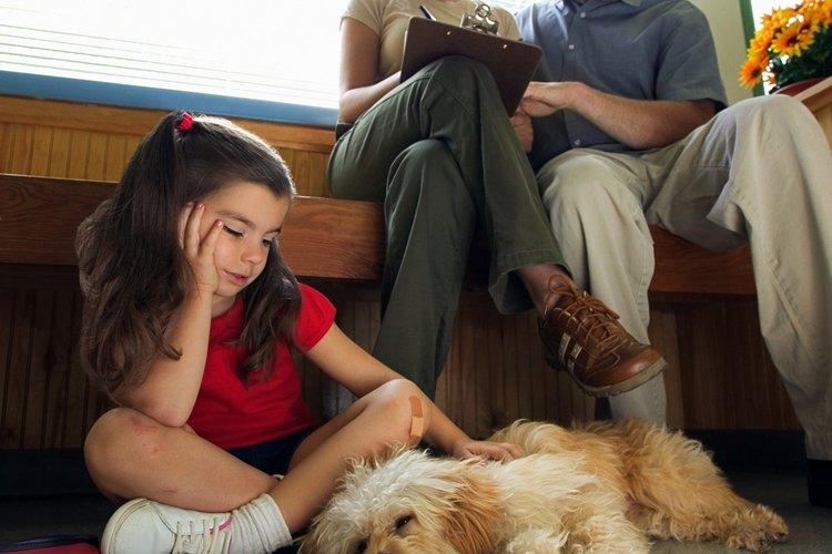 Llevar a un perro con un hemangiosarcoma al veterinario puede salvar su vida.