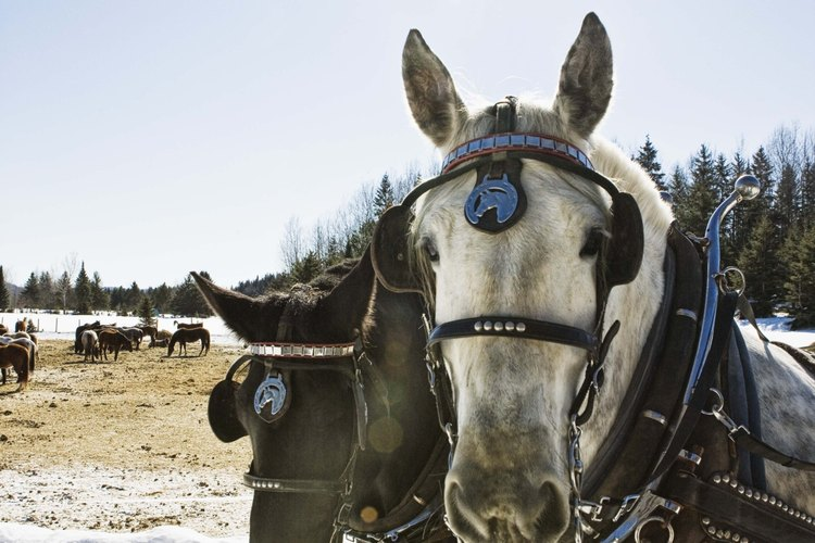 Transforma estiércol de caballo en un rico suplemento de jardín.