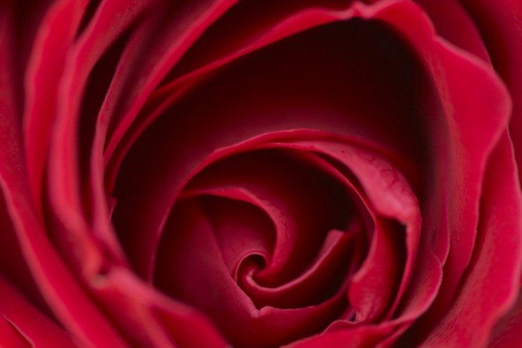 Las rosas rojas agregan un toque romántico a cualquier centro de mesa.