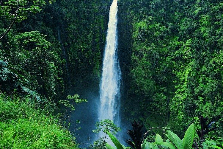 Hawaii cuenta con selvas tropicales exhuberantes.