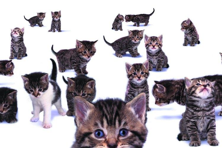 A menudo, los gatos maúllan para atraer tu atención.
