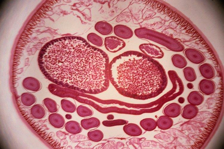 Los nematodos pueden ser tratados con plaguicidas específicos o instalando plantas nuevas en áreas de jardín diferentes.