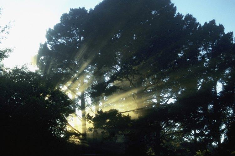 Marin County, en California, tiene hermosos senderos que corren por los bosques y alrededor de reservas.
