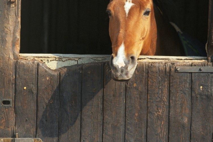 Mantén a tu caballo quieto y tranquilo como sea posible.