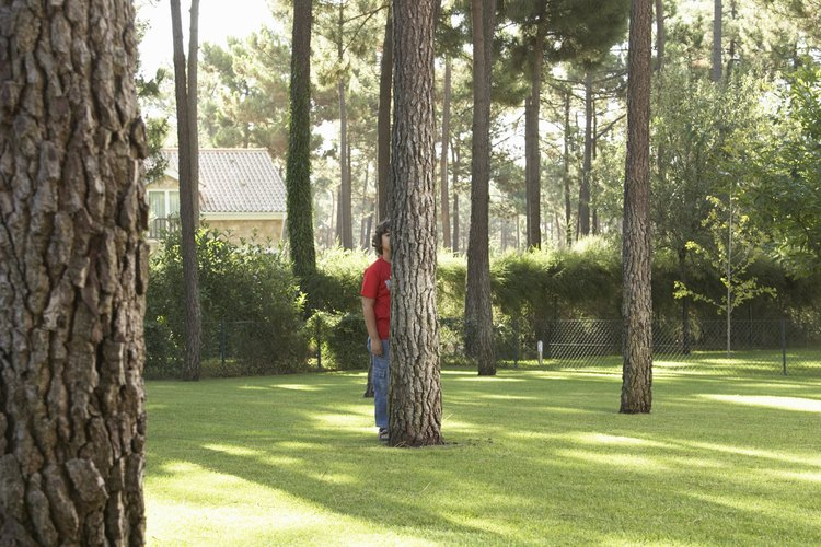 Controla la caída de tu árbol para protegerte.