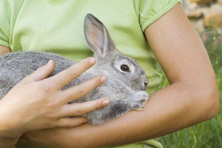 Tanto los conejos blancos de Florida como los conejos de Nueva Zelanda se utilizan se utilizan típicamente para múltiples propósitos.