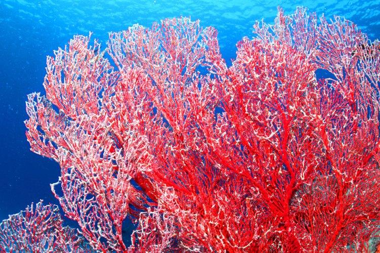 El pacífico cuenta con varias zonas de arrecifes coralinos.