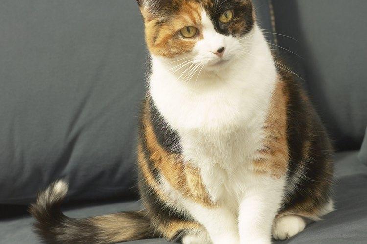 Los gatos pueden desarrollar el gato de hacer sus necesidades en lugares inapropiados.