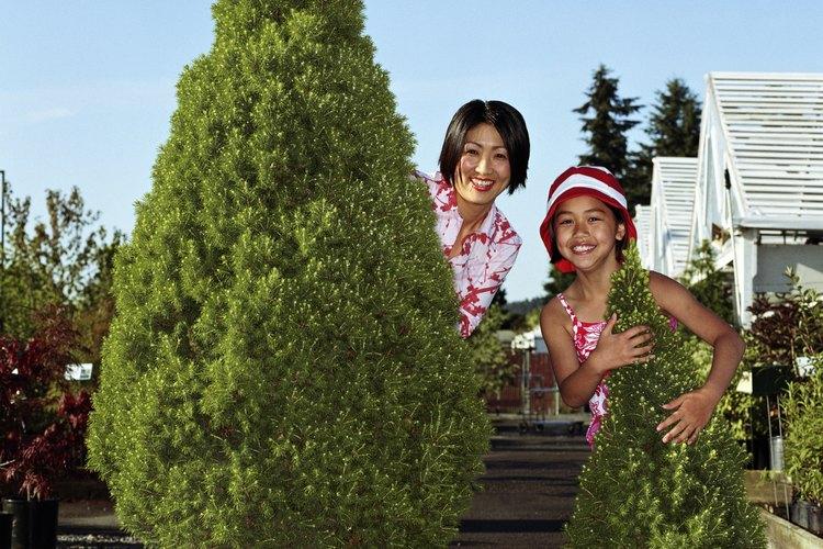 Arbustos grandes y árboles crecen en contenedores.