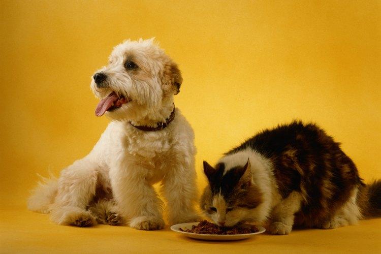 La orina animal o humana sobre pisos y colchones puede genera un mal olor duradero.