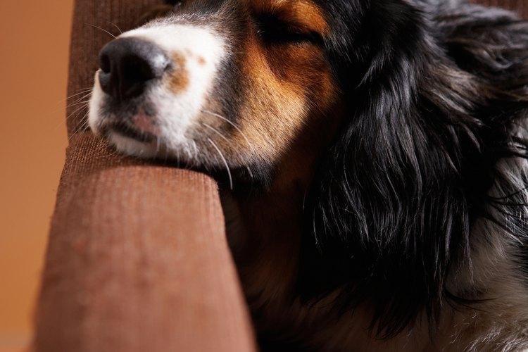La aspirina puede producir malestar estomacal en los perros.