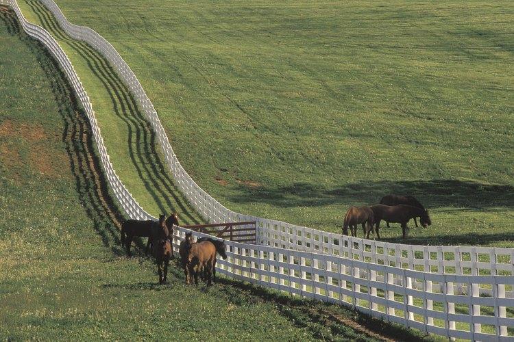 Versailles se encuentra en el corazón de un campo de hierbas, bourbon y caballos pura sangre.
