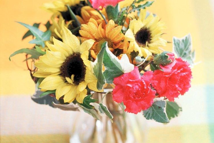 ¿Qué flores están en temporada en noviembre?